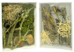 Life Experience Deco Set Jungle (LDS-02) Ideal für Nano - Terrarien