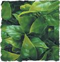 Kunststoffpflanze Mexican Philodendron (ca 30 cm)(BU-10)